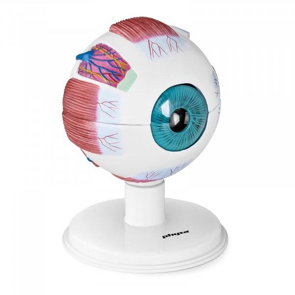 B-zboží Model oka -6:1